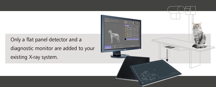 Digital X ray Direct Radiography for veterinary practices and animal clinics