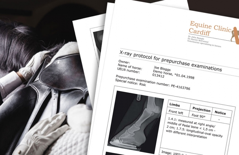 Example of report module for X-ray services relating to equine prepurchase examinations